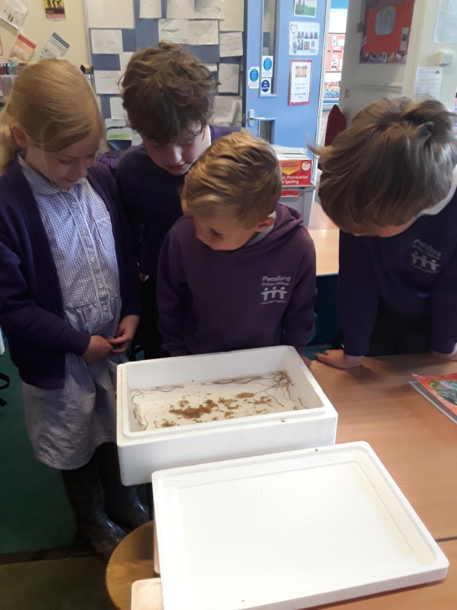 Children observe eels in the classroom before release - credit Bristol Avon Rivers Trust