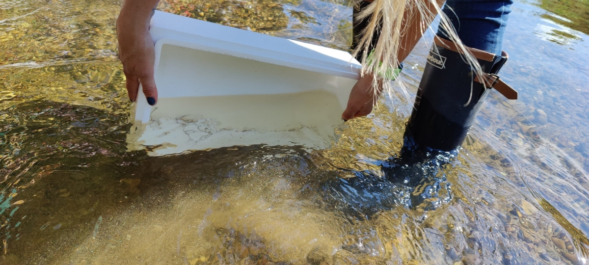 Eels released with Lincolnshire Rivers Trust - credit David Martin